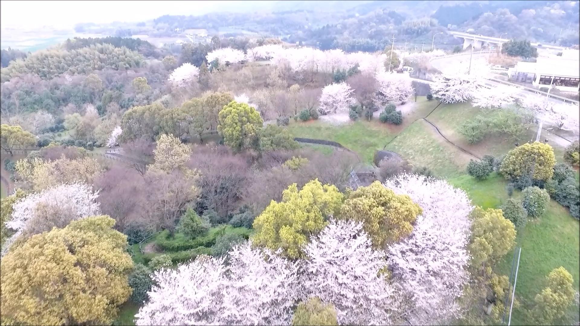 小松中央公園4